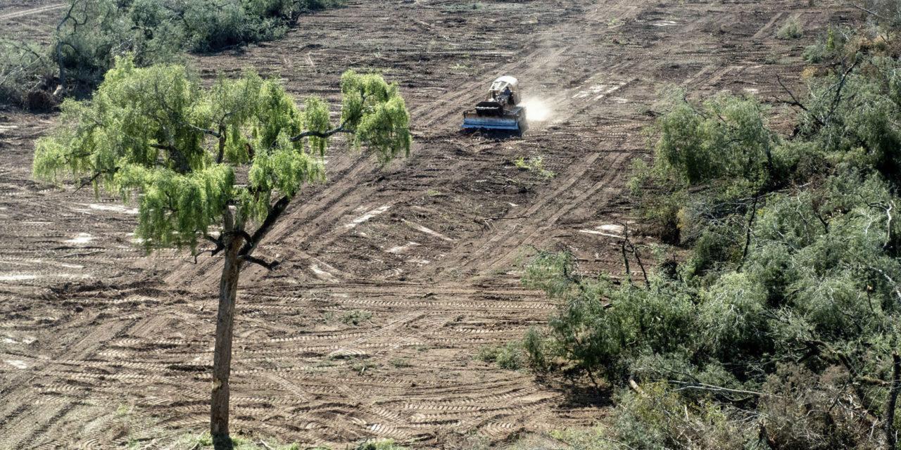 Ley de Delitos Forestales